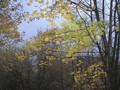 Фото №1301